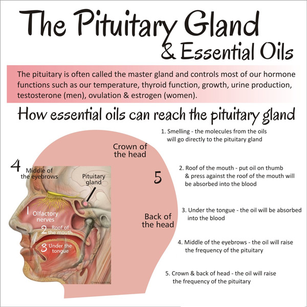 essential_oil_pituitary_gland