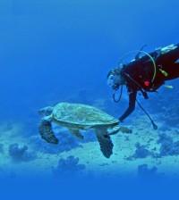 scuba-diving-2