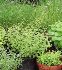planting pots for sale