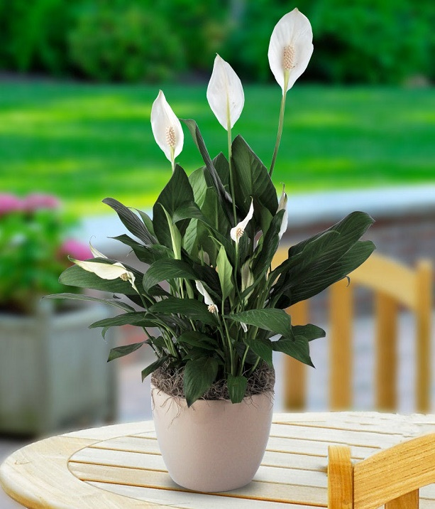 indoor plants for home 2