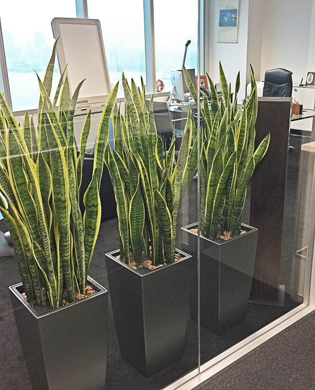 indoor plants for home 3