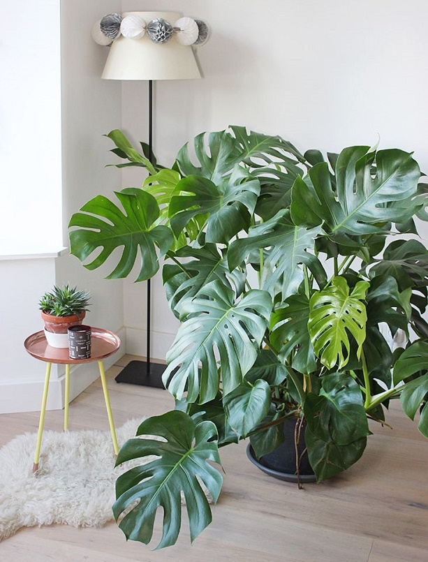indoor plants for home 5