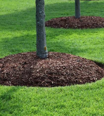 mulching tree branches