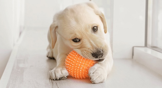 chewing toy