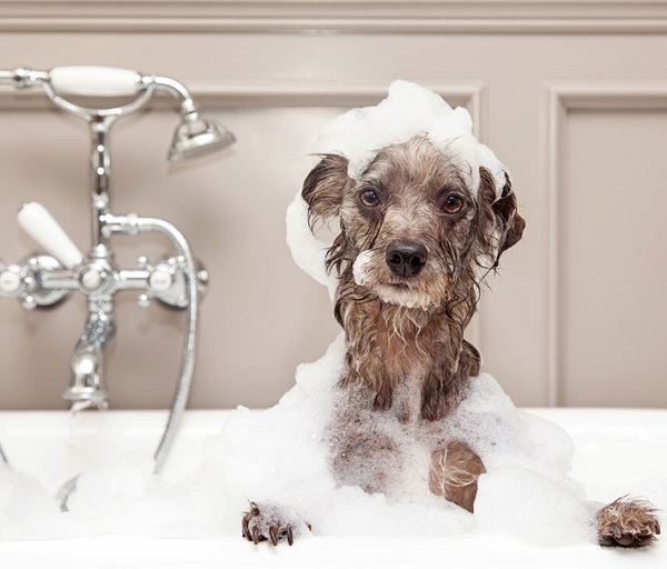 Benefits of Dog Shampoo