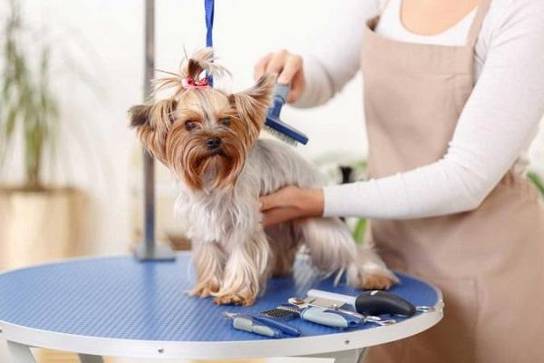 Dog Grooming Supplies