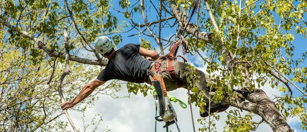 man on a tree cutting branches