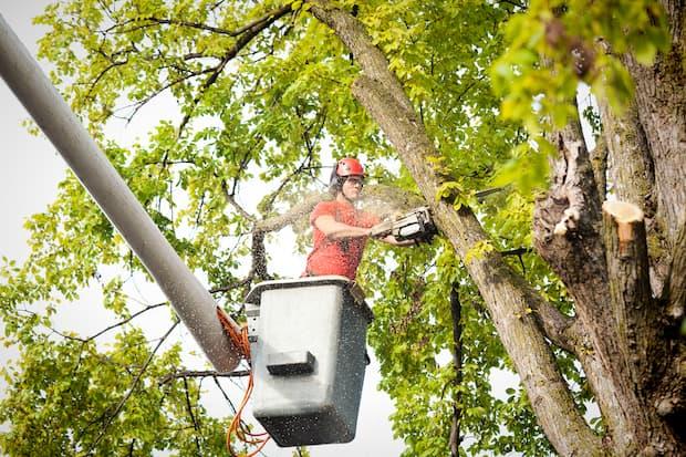 professional arborist cutting tree in the backyard
