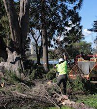 professional tree arborists removing trees