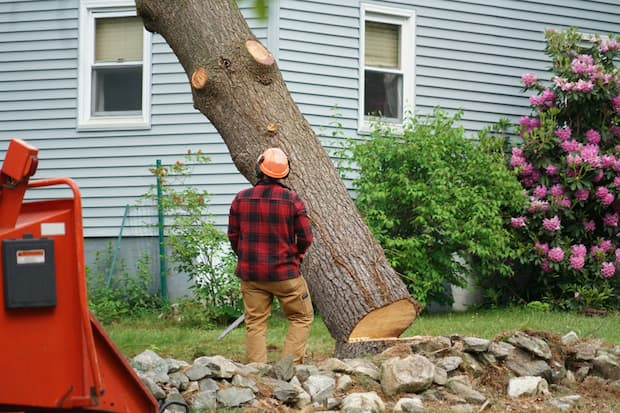 professional tree removal in garden
