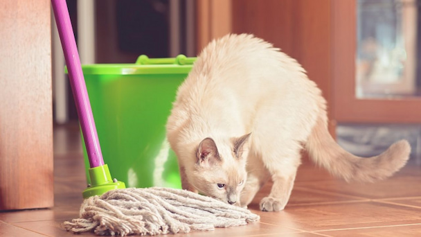 cat cleaning products