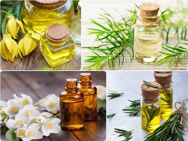 Ylang-Ylang-Tea-Tree-Rosemary-Jasmine