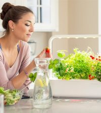 Self-Watering-Patio-Planters