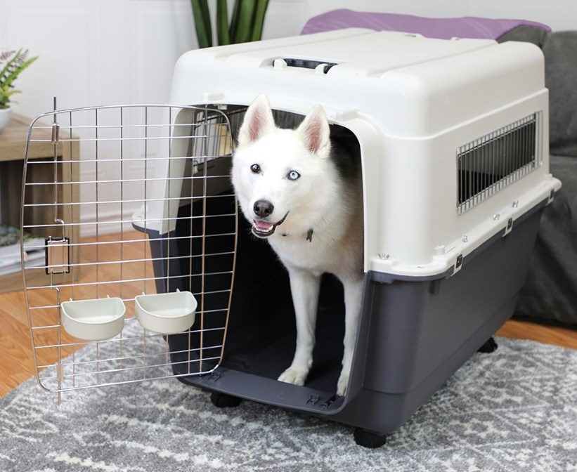 Special Dog Airplane Crates