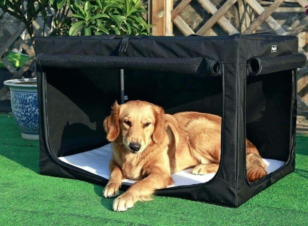 dog in a fabric dog crate
