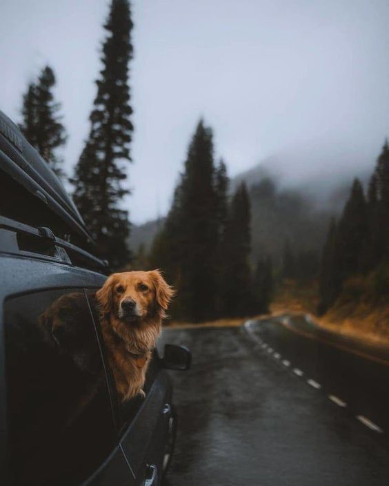 dog inside of a car going for a roadtrip